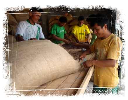 Foerste-export-af-kakao-fra-Peru_10-procent